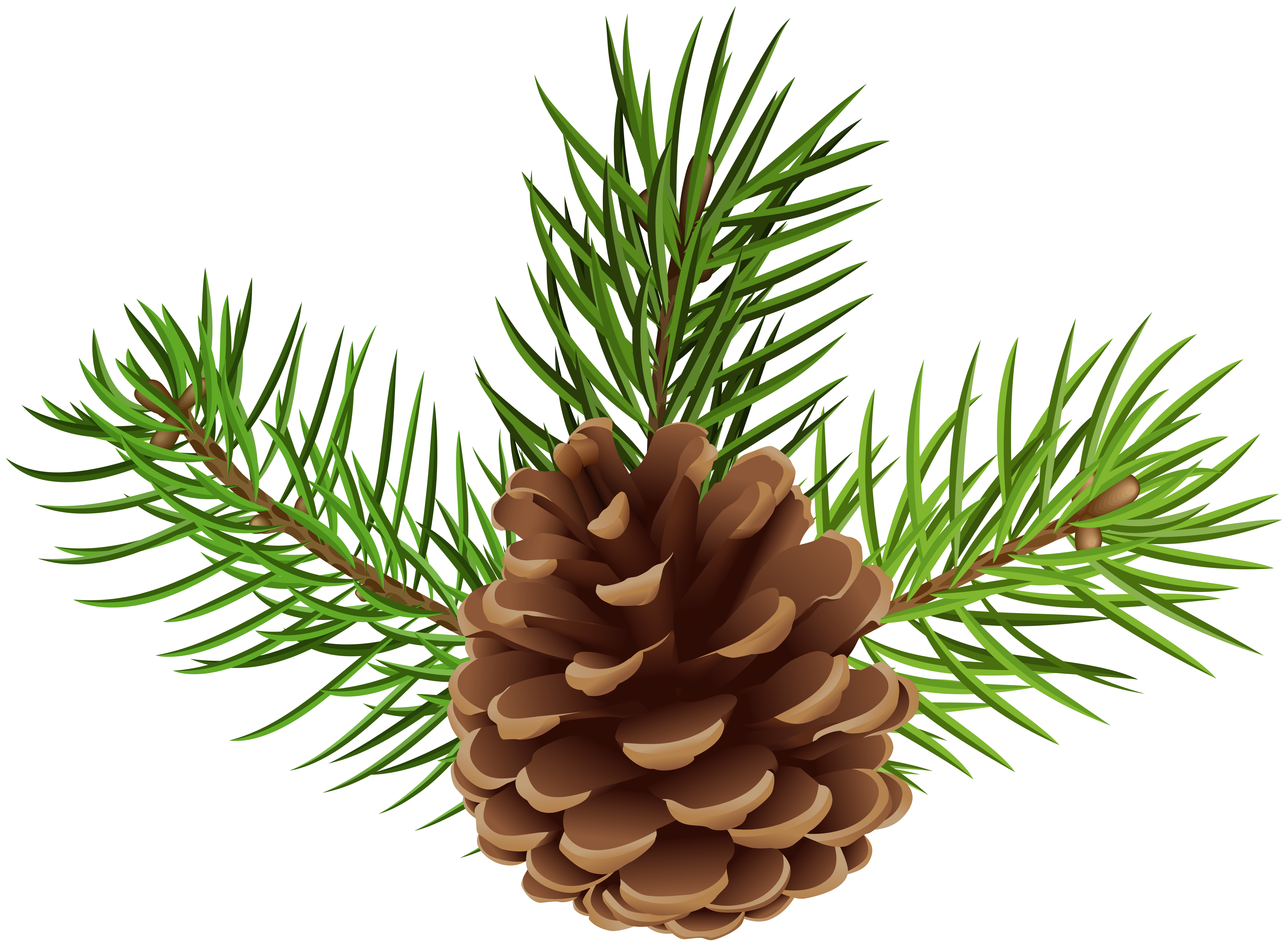Pine Cone PNG Clip Art Image.