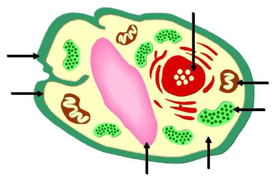 Parts of a plant cell.