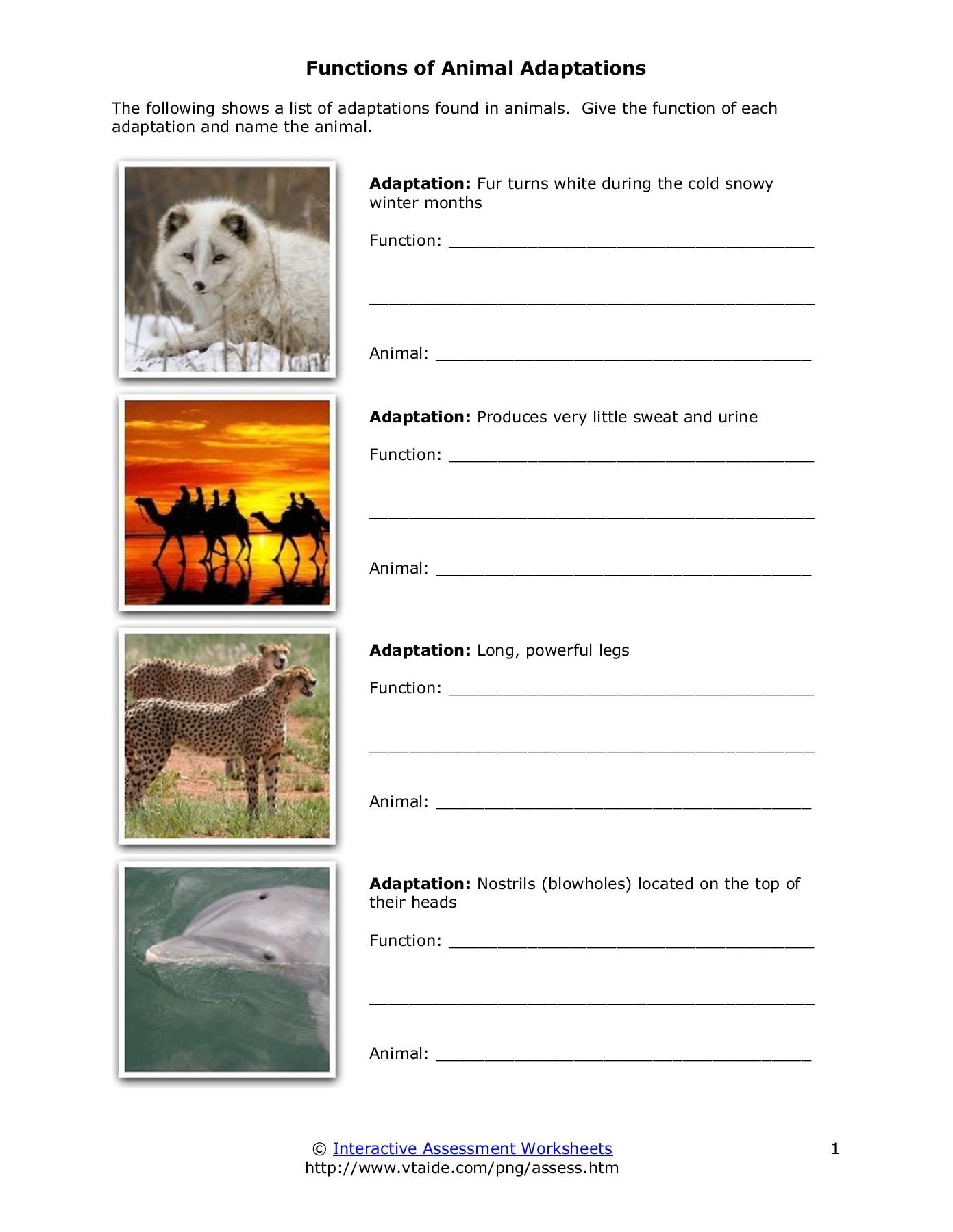 Functions of Animal Adaptations.