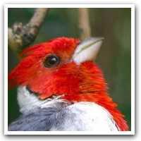 Bird Adaptations.