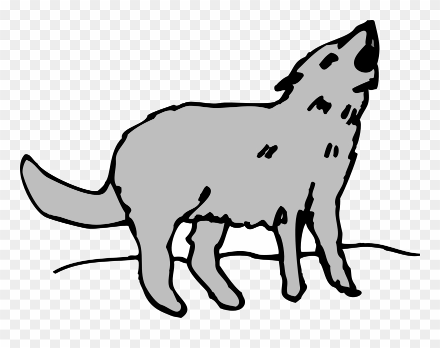 Gray Animal Coyote Howling.