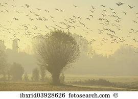 Swarm bird Images and Stock Photos. 967 swarm bird photography and.