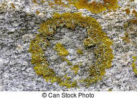 Pictures of bright golden lichen Xanthoria parietina background.