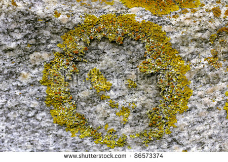 Heart Shaped Xanthoria Parietina Lichen Common Stock Photo.