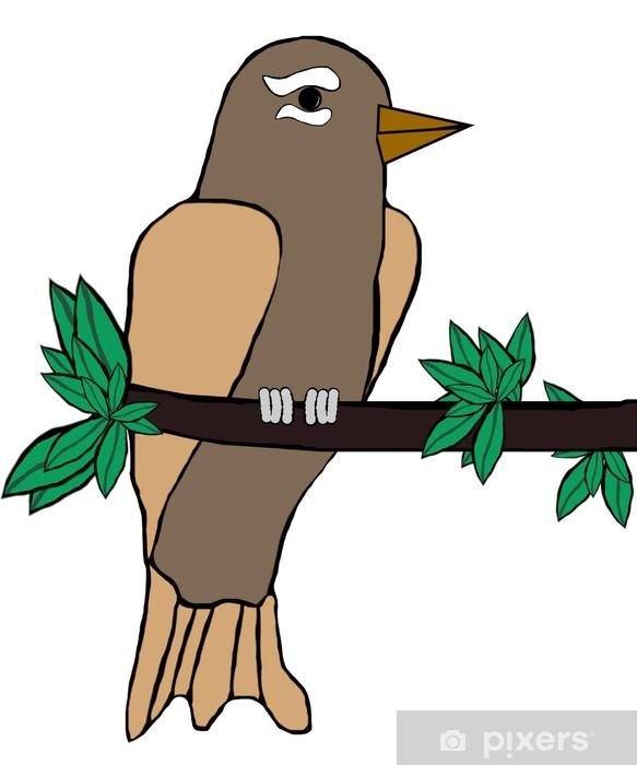 Xenops Rainforest Bird (Americas).