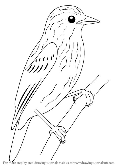 Learn How to Draw Xenops (Birds) Step by Step : Drawing.