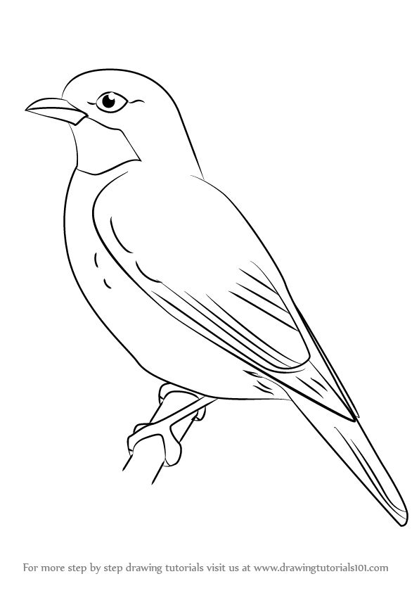 Maya Bird Clipart Black And White.