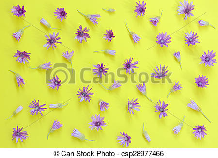 Stock Image of Everlasting, Immortelle, ( Xeranthemum annuum ) on.