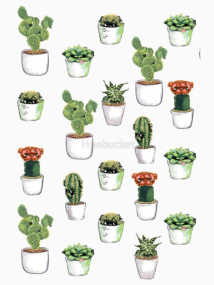 Cacti & Pugculents.