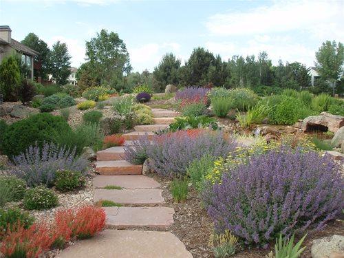 Landscape Plants: Xeriscape Landscape Plants.