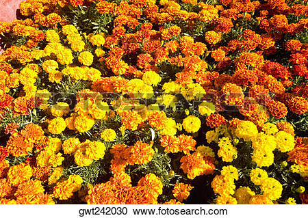 Stock Photography of Flowers on a grave, Xochimilco, Mexico City.