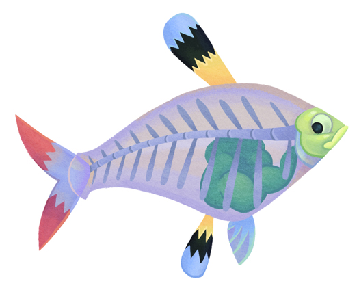 Xray clipart fish, Xray fish Transparent FREE for download.
