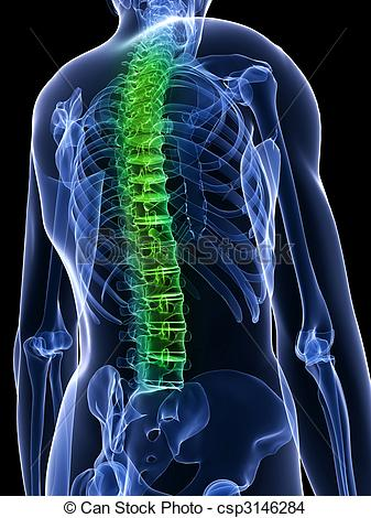 healthy spine.