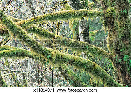 Stock Photography of Close Up of Moss on the Branch of a Tree.