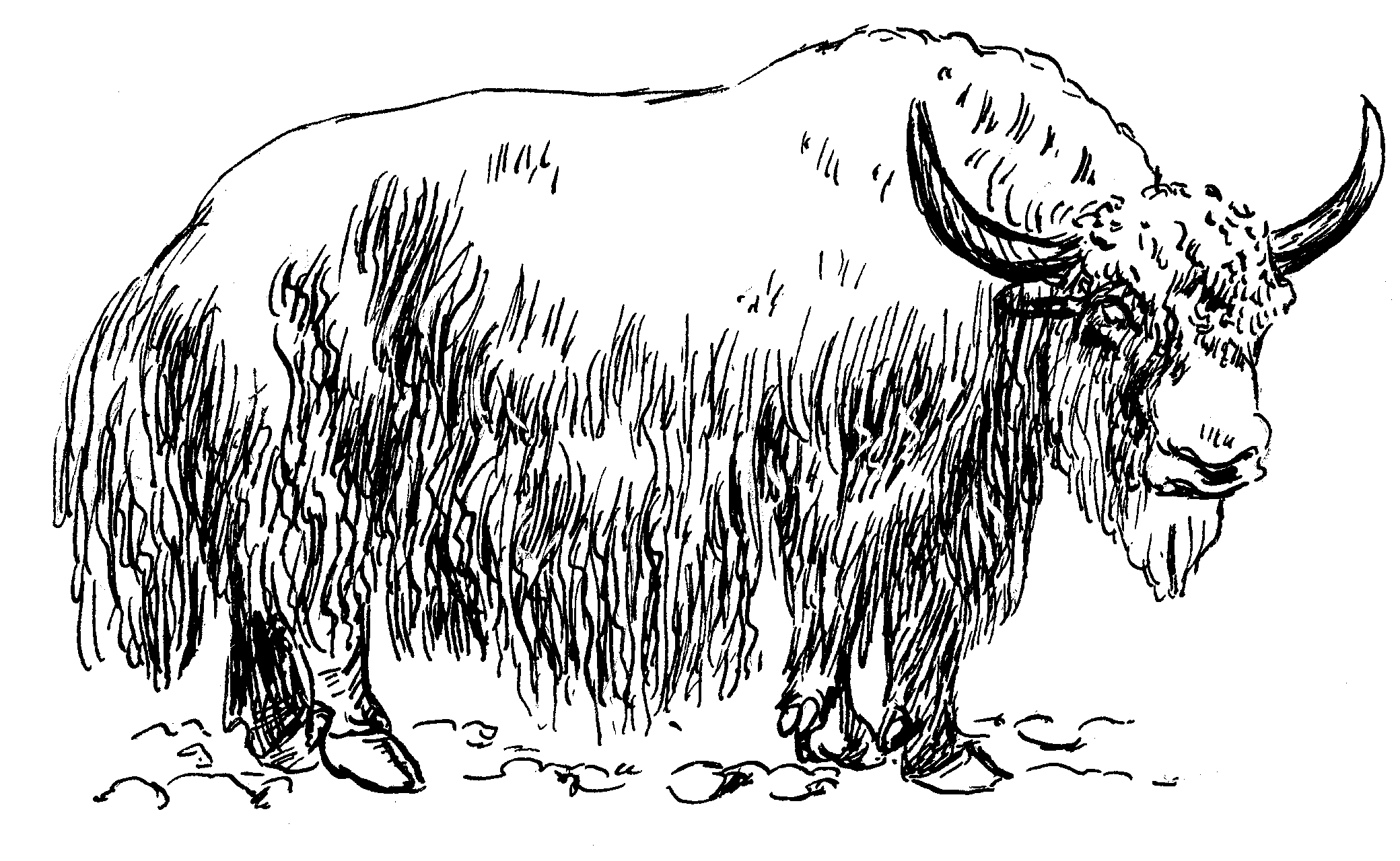 Yak PNG Black And White Transparent Yak Black And White.PNG.