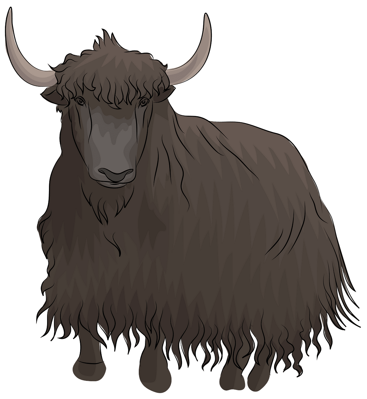 Yak clipart. Free download..