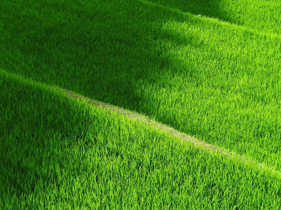 Free photo: Rice Terraces, Yamada'S Rice Fields.
