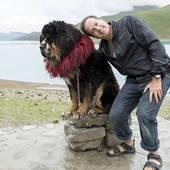 Stock Photography of Man posing with decorated Tibetan mastiff dog.