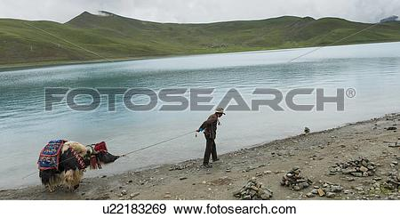 Stock Photograph of Tibetan farmer with decorated Yak at Yamdrok.