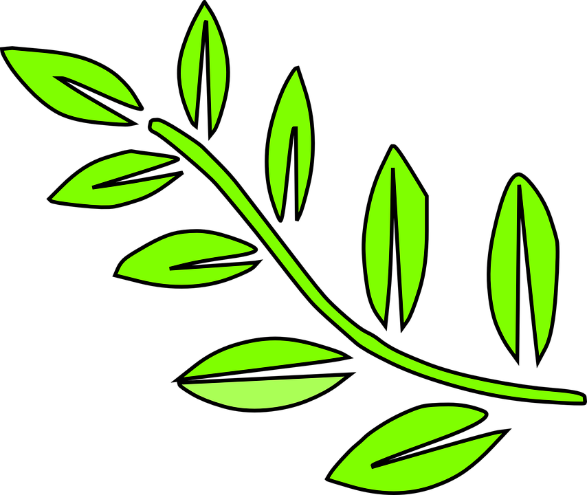 Yaprak vektör png 7 » PNG Image.