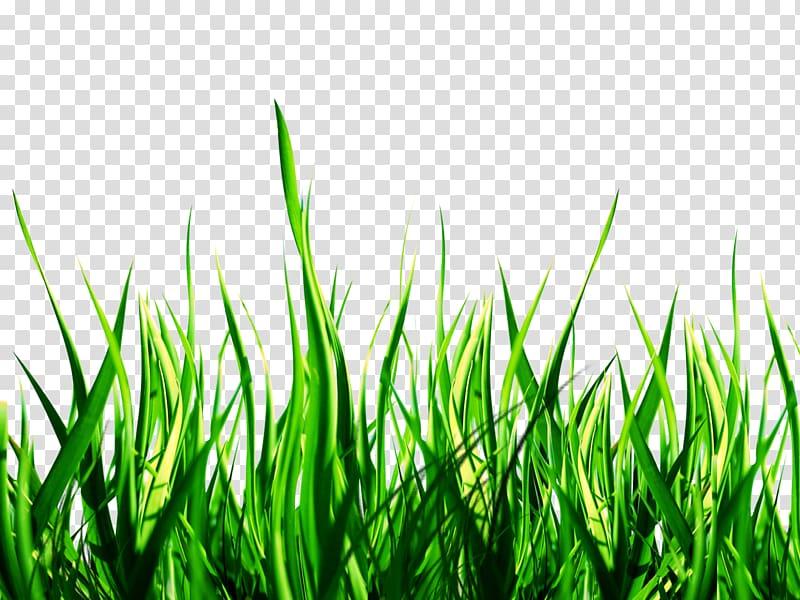 Green grass illustration, Lawn PicsArt Studio Garden Sticker.