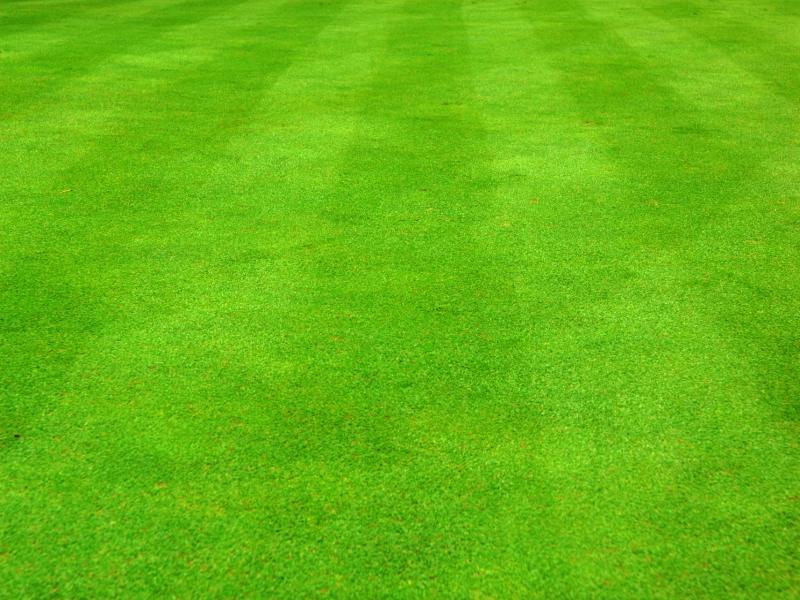 Grass Clipart Grass 93 Presentation 800x600 Resolution.