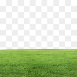 Grass PNG Images, Download 16,334 PNG Resources with Transparent.