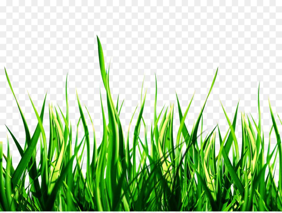 Lawn PicsArt Photo Studio Garden Sticker #172706.