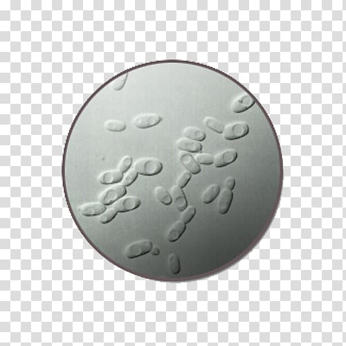 Microscope Bacteria Yeast, The yeast material under the.