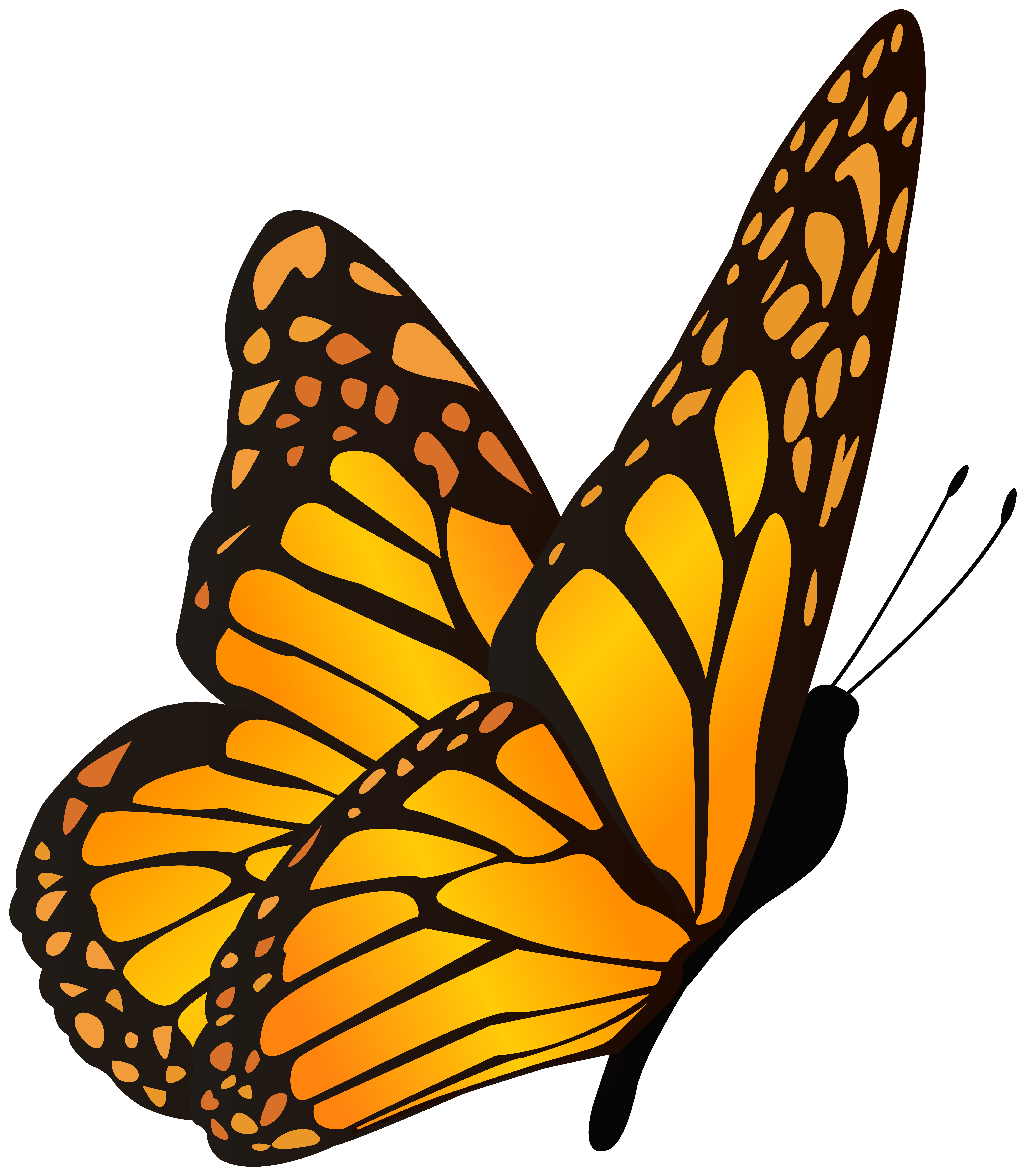 Butterfly Orange Yellow Clipart Image.