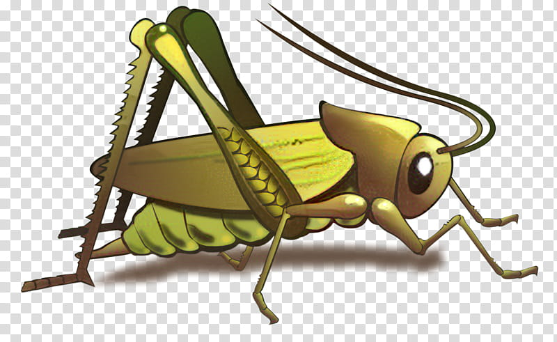 Reading, Grasshopper, Cricket, Tshirt, Insect, Clothing.