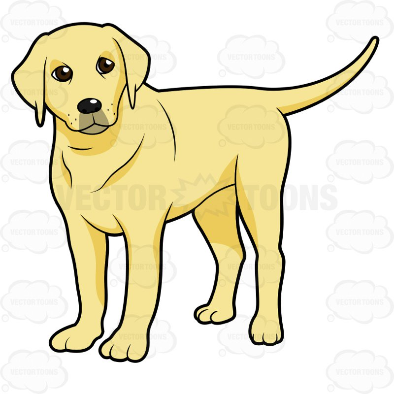 Yellow lab clipart 5 » Clipart Station.