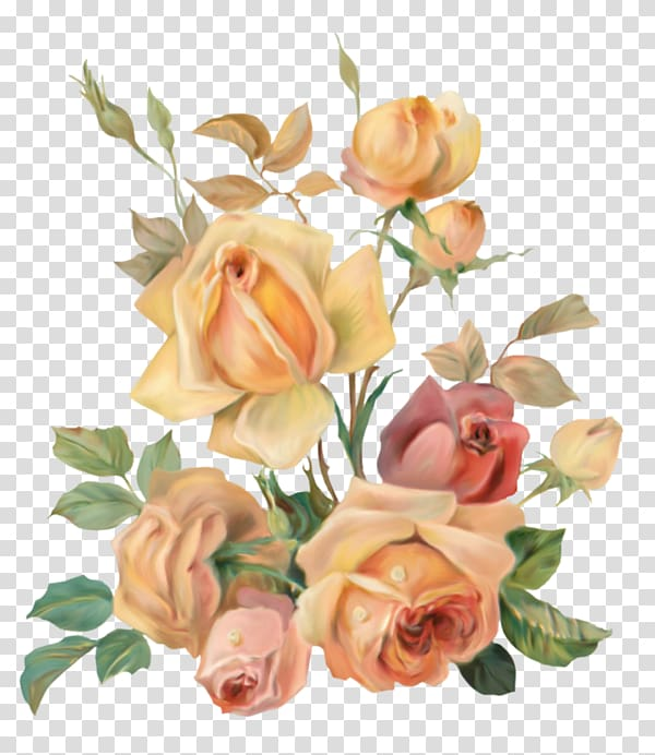 Garden roses Adobe shop Cabbage rose Portable Network.