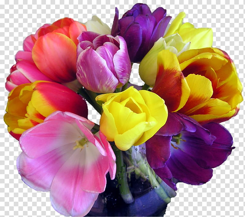 Tulips mixed bouquet, purple and yellow tulips transparent.