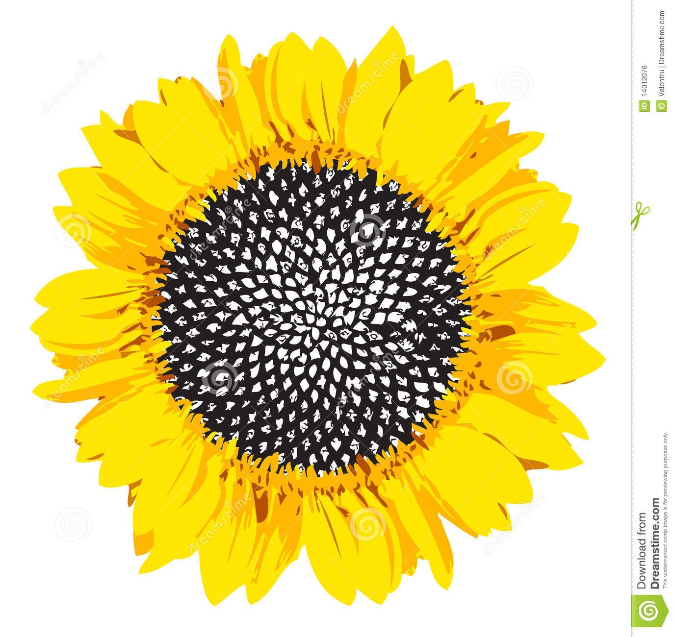 Sunflower Clip Art Black And White Yellow Sunflower.