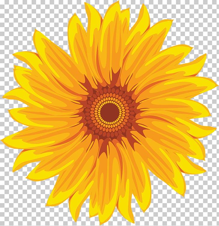 Common sunflower Yellow White, Hand.