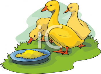 Yellow Ducklings Clipart Picture.