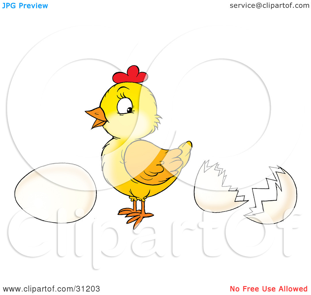 Clipart Illustration of a Cute Baby Chick Standing Between A Whole.