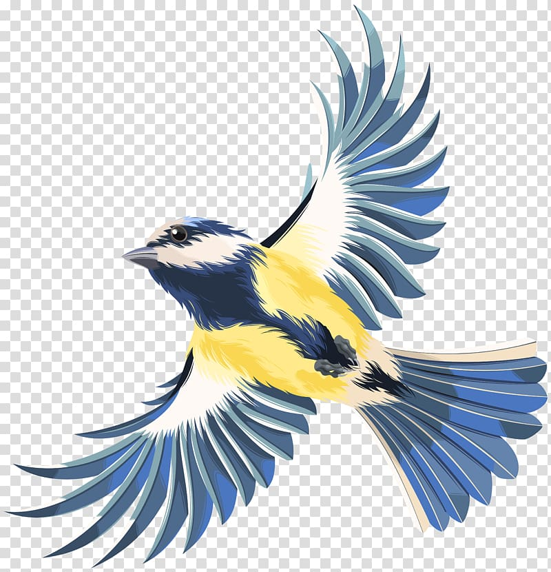 White, gray, and yellow flying bird , Bird flight Bird.