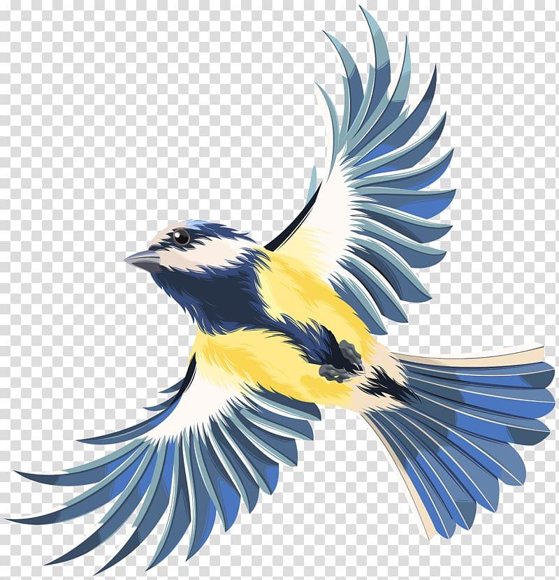White, gray, and yellow flying bird , Bird flight Bird.