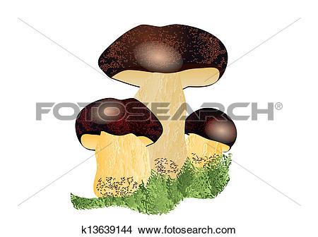 Clipart of Boletus mushroom k13639144.