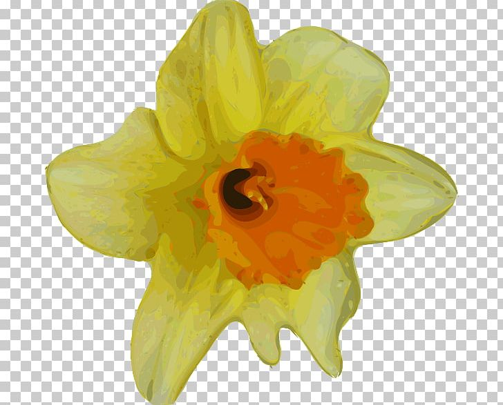 Flower Buttercup Yellow PNG, Clipart, Amaryllis Family.