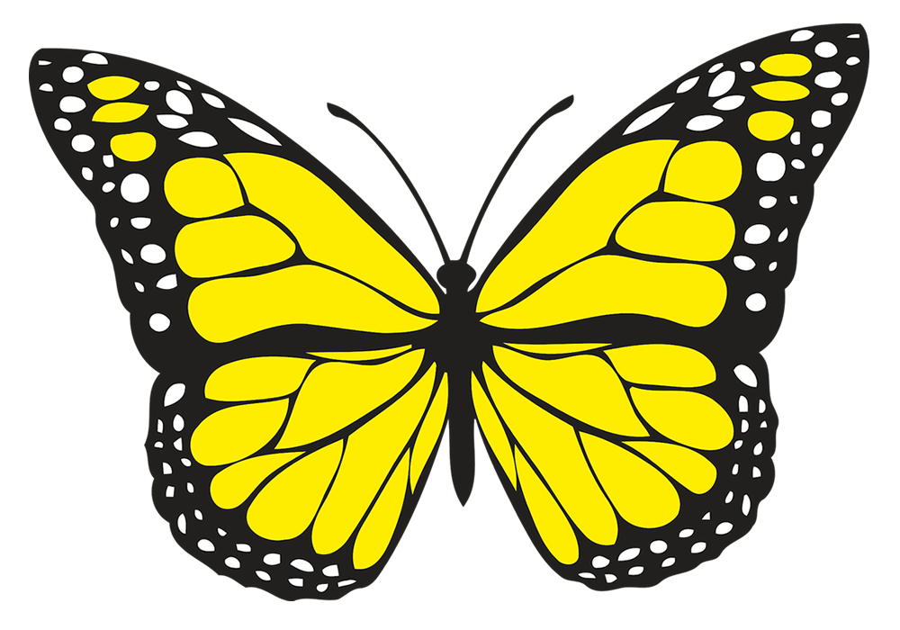 spiritual meaning of yellow butterflies. Hope and guidance.