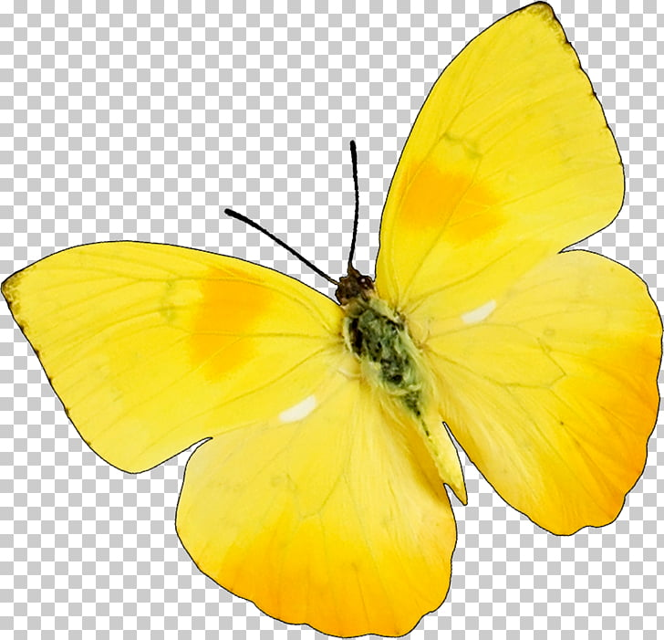 Butterfly Insect Snoopy & Charlie Brown Yellow , butterfly.