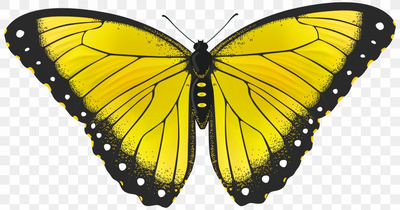 Butterfly Yellow Clip Art, PNG, 8000x4221px, Butterfly.