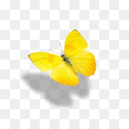 Yellow Butterfly PNG Images.