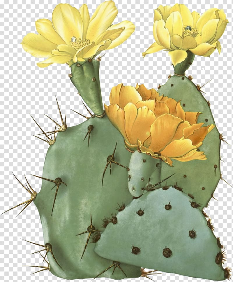 Green prickly pear cactus with yellow and orange flowers.