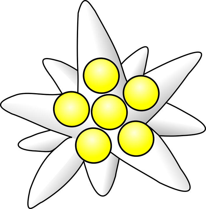 Free vector graphic: Flower, White, Yellow, Centre.