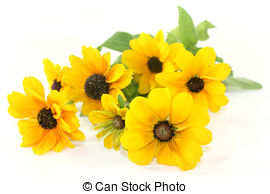 Coneflower Stock Photos and Images. 1,633 Coneflower pictures and.