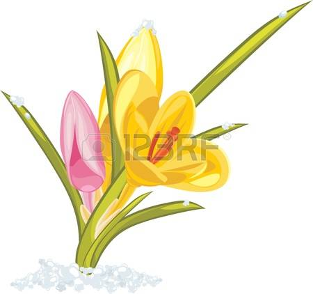 449 Crocus Flower Yellow Cliparts, Stock Vector And Royalty Free.